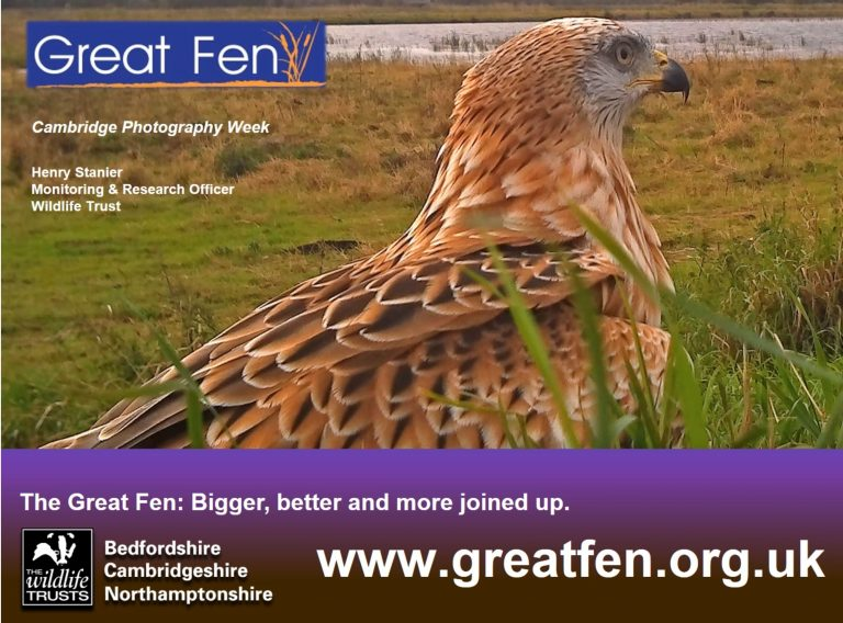 Photography at the Great Fen Wildlife Trust with Henry Stanier